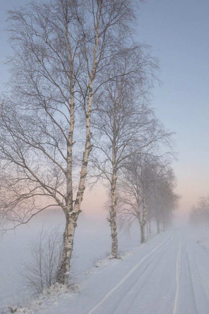 Kaunis pakkaspäivä Pohjanmaalla auringonlaskussa pellolla.