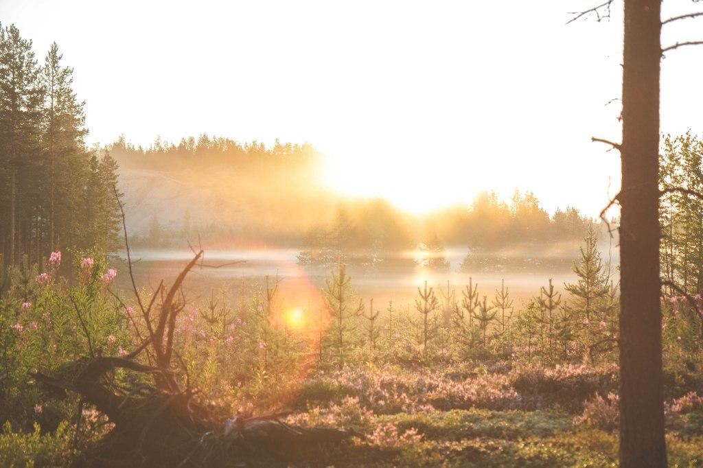 Kainuun luonto ja sumua auringonnousussa heinäkuussa.
