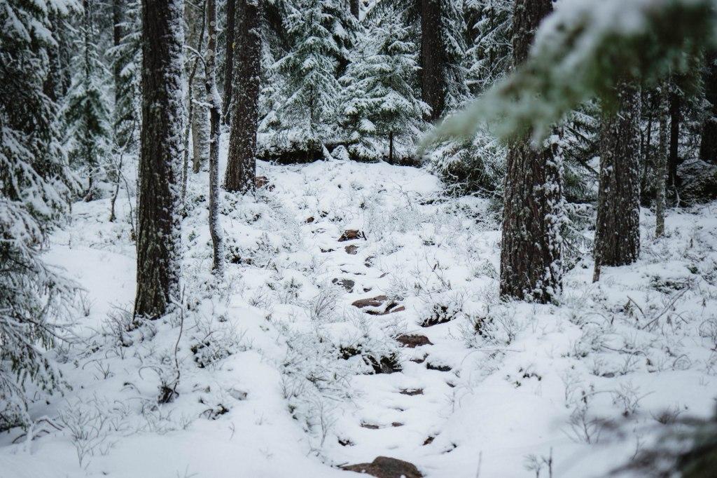 Etelä-Konneveden kansallispuistossa talvella. Lumi oli peittänyt polun jäljet. Puihin merkityistä merkeistä oli vaikea saada selvää, kun lumi oli peittänyt niitäkin.