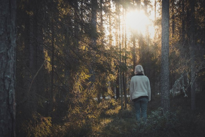 Aamuisen metsän mystiikkaa