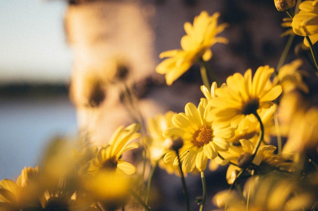 Kesän alun kukkaloistoa Tampereella